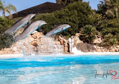 Zoo marine weddings